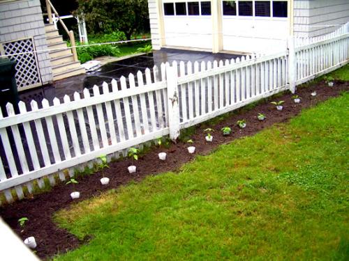 June 6 garden